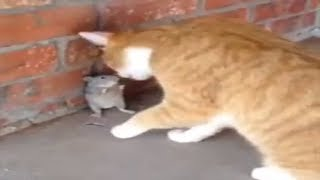 Funny Cats Attack |Video for  kids 2018
