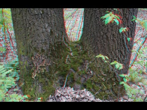 Morning Walk in 3D ! Forest and City ! The Best 3D Photo