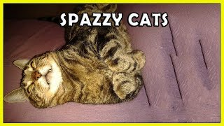 Funny Spazzy Cats 2018 NEW HD FunnyCat