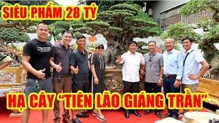 Lễ hạ cây Tiên Lão Giáng Trần khiến giới chơi cây cảnh Việt Nam hoảng hốt