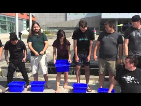 ALS Icebucket Challenge - TribeHR