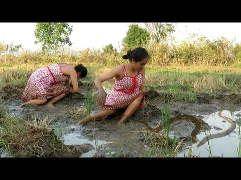 The smart woman fishing on the rice field near her village.Fishing by hand-How to fishing(119)