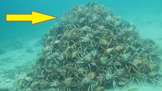 They Think Everything Is Normal Underwater Until They Spot This Pile Of Nightmares OMG