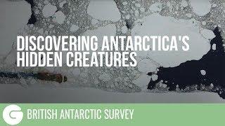 Discovering Antarctica's Hidden Creatures