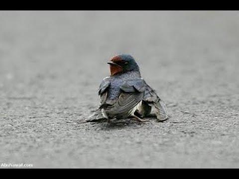 Baixar Pássaro Ferido- Noemi Nonato