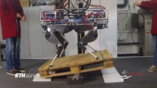 Robust Whole–Body Motion Control of Legged Robots