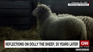 Reflections on Dolly the Sheep, 20 years on