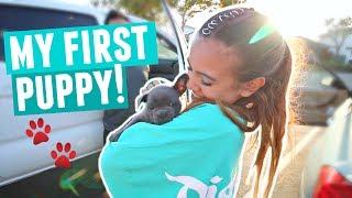 FINALLY GETTING MY PUPPY!! Cutest Blue French Bulldog Puppy Reaction
