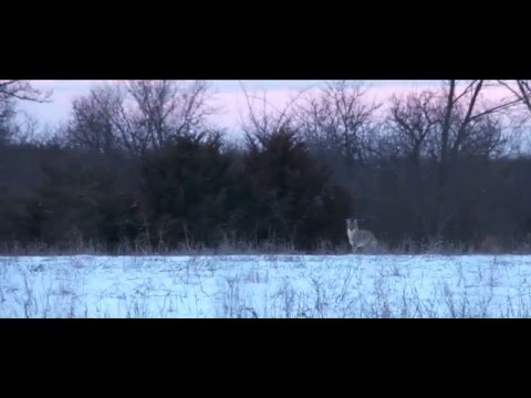 Caldwell Fall Hunting Brand Video