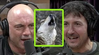 Glenn Villeneuve on Eating Boiled Wolf and Caribou Stomach Contents