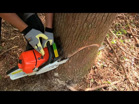 how to cut a fallen tree with chainsaw