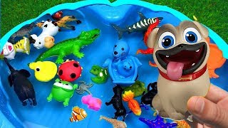 Learn Colors with Animals Swimming Zoo animals for kids Learn Wild Animals Names and Sounds
