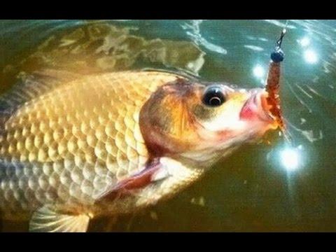прикормка пластилин для рыбалки своими руками
