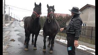 Caii lui Gheizu de la Tinca, Bihor - 2019