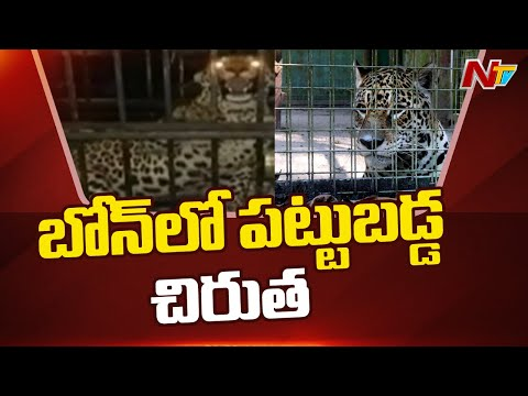 Medak: Leopard trapped in cage