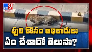Efforts on to catch hiding leopard in Hyd..