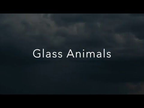 Cocoa Hooves by Glass Animals Lyrics
