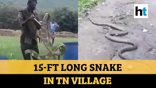 Viral Video: 15-ft long King Cobra spotted in village, Tam..
