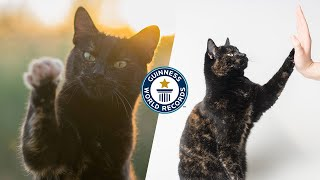 How many tricks can this cat do? - Guinness World Records