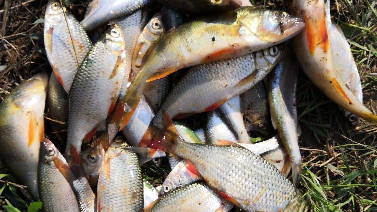 Рыбалка в ставропольском крае 2019