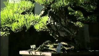 Zvierací rekordmani - Záhradníci