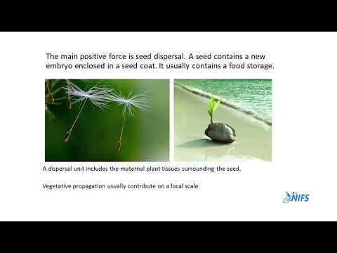 Plant Migrations 01