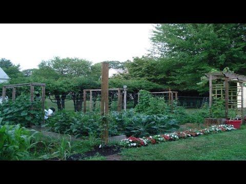 Aiman S Mom Backyard Garden Grow Your Own Organic