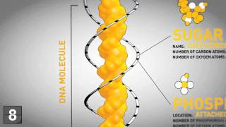 18 Things You Should Know About Genetics - YouTube