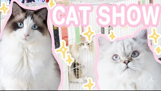 ♡ CAT SHOW FLUFFY FOOTAGE ♡