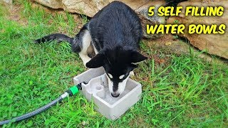 5 Self Refilling Water Bowl For Pets