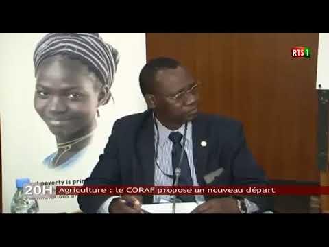 Politique agricole en Afrique : le CORAF prône la mutualisation de la recherche dans ce domaine