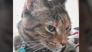 Kitten and Sora Montage
