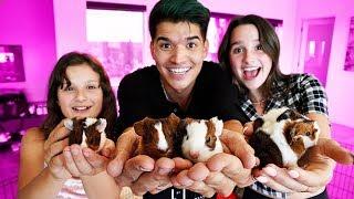 World's Tiniest Guinea Pig Surprise! (ft Annie & Hayley LeBlanc)