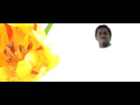 Amadou - Blume