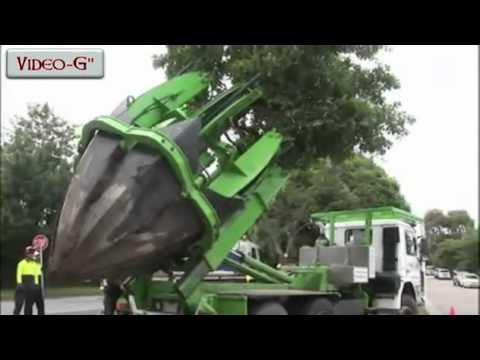 Niente motosega:il trasloco dell'albero in pochi minuti
