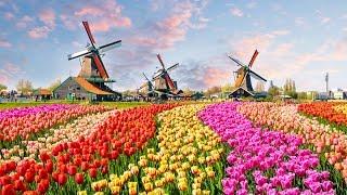 """Cuộc Sống Nhật #21: Bay Flycam Ngắm Hoa Tulip ở Awaji Nhật Bản - """"ĐẸP...!"""""""