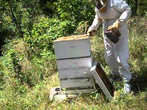 Selah Bamberger Ranch bee hive