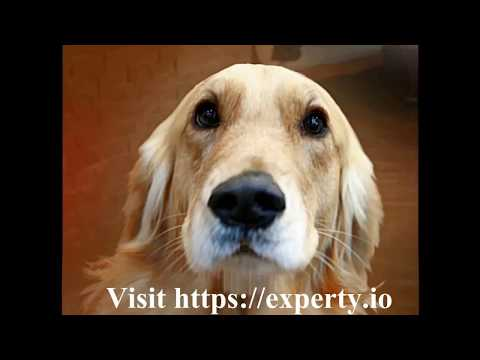 Experty Explained By A Dog