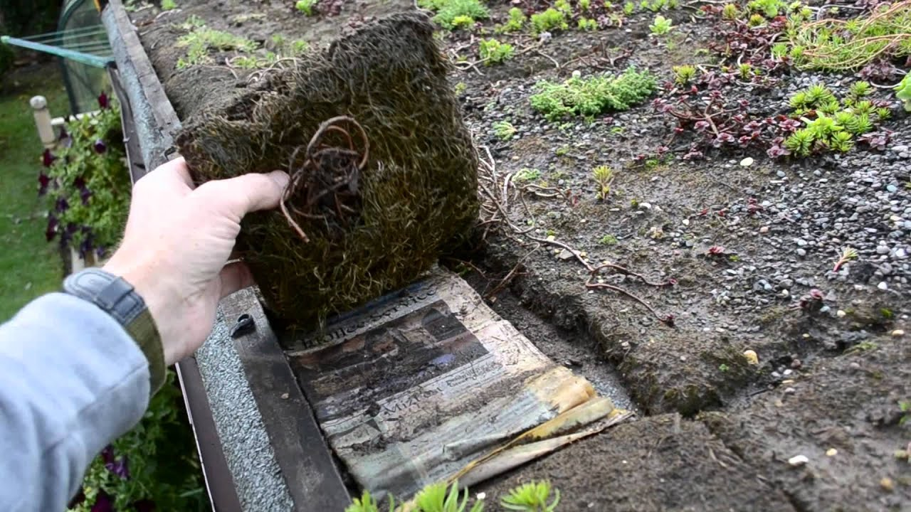 Diy Sedum Shed Roof Youtube