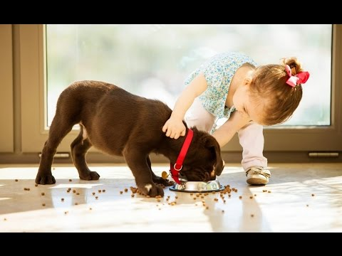 Dogs and Babies are Best Friends   15 Minutes