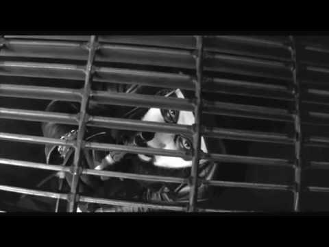 Nate Turner - Ancestor's Anthem