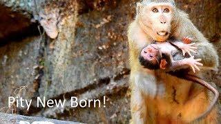 MG-What's Happened Problem On Duchess's Newborn?,Cameraman Much Concern Newborn Baby Monkey.