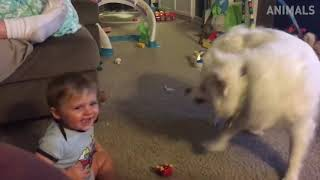 This will make you Laugh | Funny Cats & Dogs Compilation
