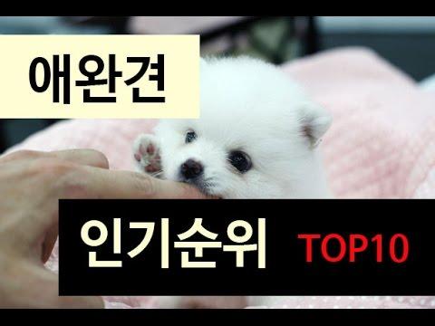 (랭킹박스) 애완견 인기순위 TOP 10