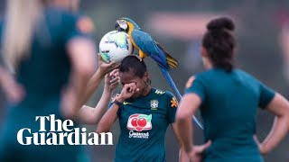 Viral video: Parrot interrupts football practice in Brazil..