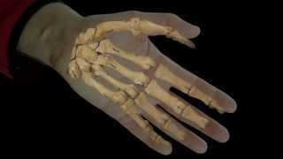 Musikvideo Skelettet