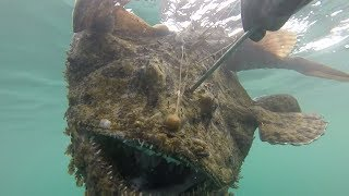 THE DIVE OF A LIFETIME! Massive MONKFISH- Catch and Cook