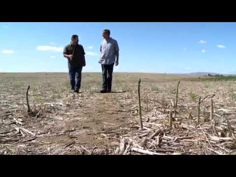 Columbia Valley Farms - Asparagus Farmer