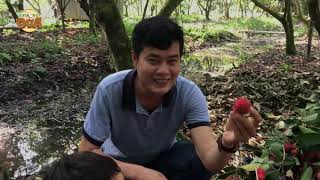 Khương Dừa lạc vô vườn chôm chôm trĩu quả, gặp hai cao thủ đánh ghen ẩn mình lặt chôm chôm?