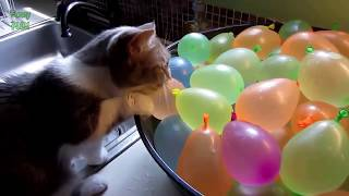 Funny Cats vs Balloons Compilation 2014 NEW HD